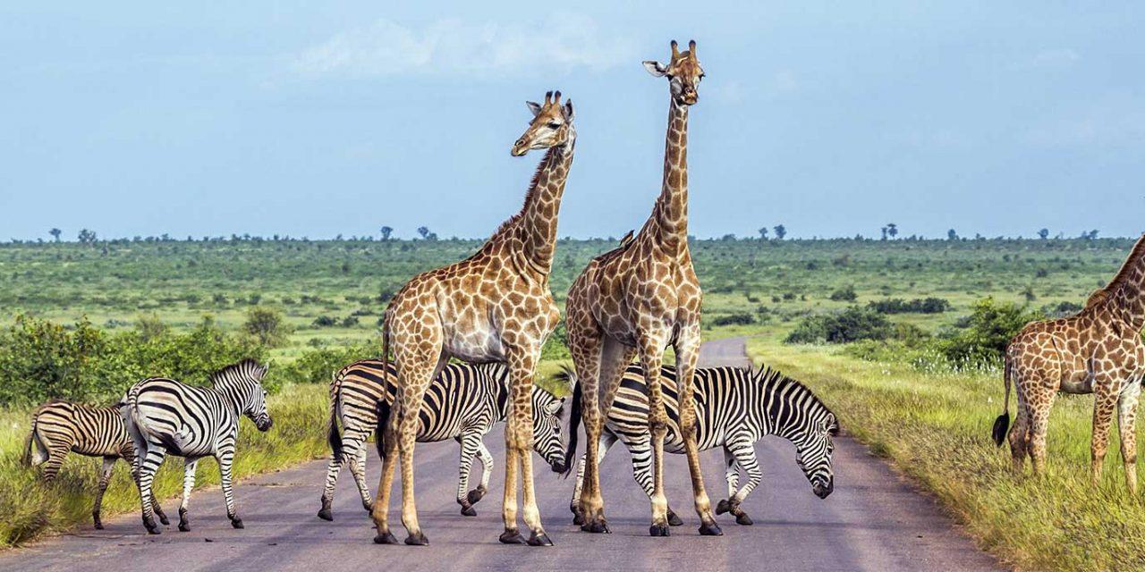 https://btgviagens.com.br/wp-content/uploads/2019/09/pacotes-de-viagens-banner-destino-africa-africa-do-sul-kruger-national-park-1280x640.jpg