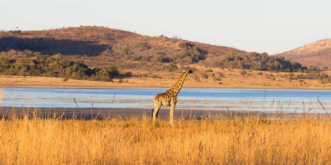 https://btgviagens.com.br/wp-content/uploads/2019/09/pacotes-de-viagens-banner-destino-africa-pilanesberg-national-park-1280x640.jpg