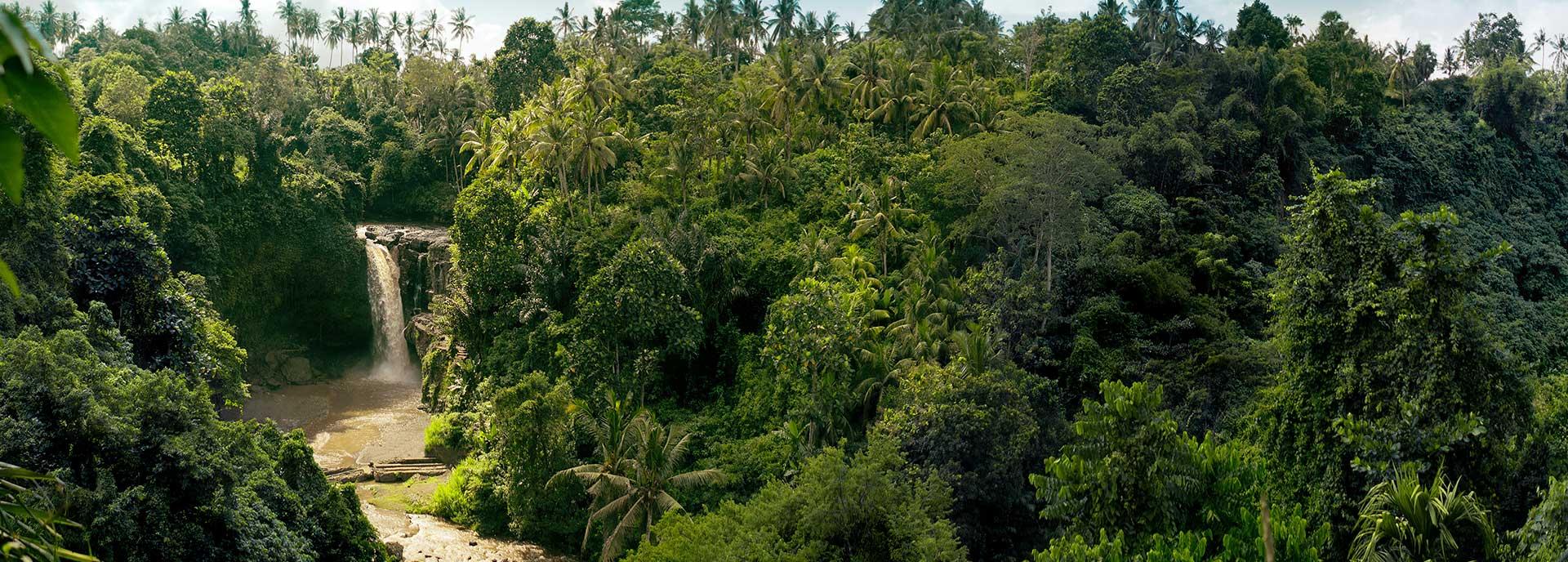 Pacotes Amazonas