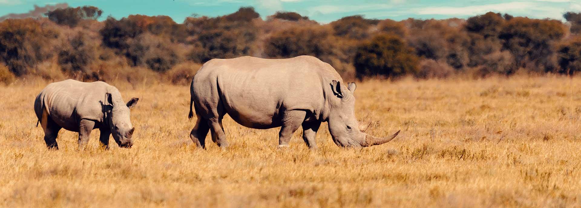 Pacotes de viagem para a África - Botswana